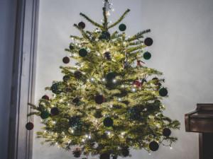 SOUTĚŽ. Vyberte nejkrásnější vánoční stromeček čtenářů Drbny!