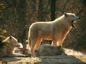 Brněnská zoo v minulém roce opět překonala návštěvnický rekord