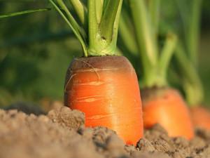Brno chce podpořit lokální zemědělství a udržitelné využívání potravin