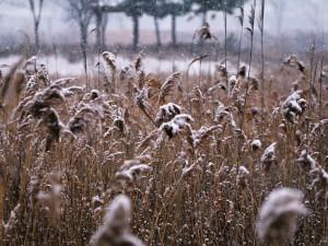 POČASÍ NA PÁTEK: Ráno se dostaví mrznoucí mrholení a sněhové přeháňky, denní teploty budou okolo nuly
