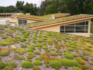 Zelené střechy v Brně mají úspěch. Od února město bude opět přijímat žádosti o příspěvek