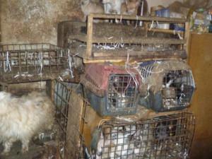 Tresty za týrání zvířat se možná zpřísní. Návrh dnes přes nesouhlas Sněmovny přijal Senát