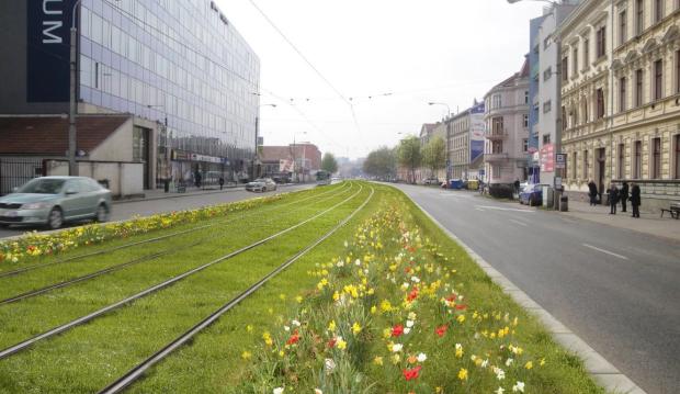 Nové sady čekají louky i výluky. Dopravní podnik vymění při rekonstrukci tramvajové tratě keře za luční kvítí