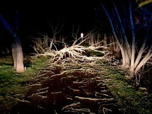 Jihomoravští hasiči během noci zasahovali u desítek popadaných stromů