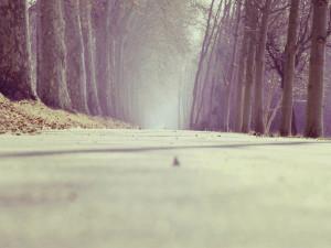 POČASÍ NA SOBOTU: Po ránu mlhy, přes den jasno. Teploty vyšší šesti stupňů ale nečekejme