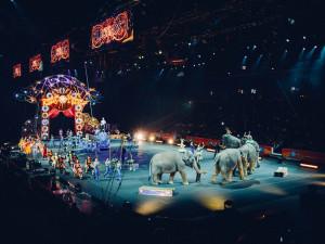 Asociace českých veterinářů požaduje úplný zákaz šelem v cirkusech