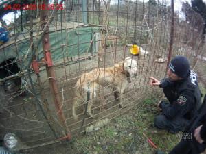 VIDEO: Brněnští strážníci odebrali majitelům zuboženého retrívra. Bez vody a jídla žil ve vlastních výkalech