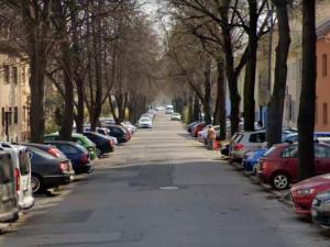 Brno chce zachovat lipovou alej na Vodově ulici, přizpůsobí jí rekonstrukci potrubí a silnice