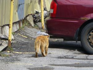 Žena v Brně se děsila obří veverky, strážníci z domu vyprovodili zrzavou kočku