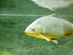 Při nákaze koronavirem selhává imunitní systém, posílit jej může rybí tuk a vitamin D