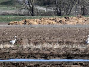 Ústav ochrany půdy vysušil navzdory protestům ornitologů mokřad, kde hnízdili vzácní ptáci