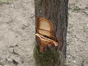 FOTO: Nezvaný host se vloupal do chaty. Nic neukradl, pokusil se ji zdemolovat a pokácet strom