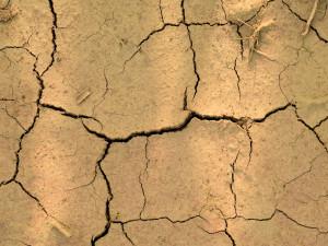 Deště z minulého týdne dosytily půdu do necelého půl metru, hlouběji zůstává velké sucho