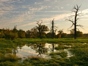 Státní podnik drancuje vzácné lužní lesy Moravské Amazonie, stěžují si odborníci
