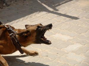 Agresivní vlčák v Židenicích pokousal mladého muže, opilý majitel pak sprostě nadával strážníkům a napadal je