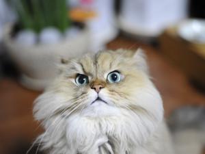 Koťata i štěňata zůstala ve Švédsku. Podvodník ze zájemců vytahal desítky tisíc korun, zvířat se nikdy nedočkali