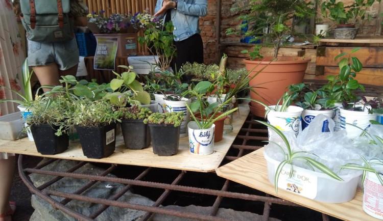 Kupte rostlinu, zachraňte folklór