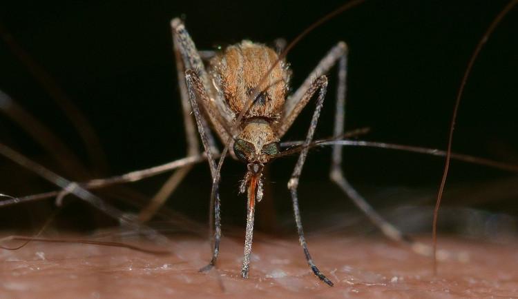 Na jižní Moravě hrozí lokální přemnožení komárů