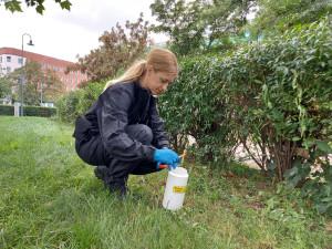 Tři děti se v Brně poranily o odhozenou jehlu. Strážníci vyčistili ulice