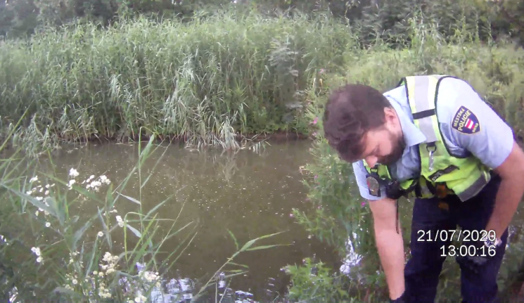 VIDEO: Strážníci vytáhli z jezírka v Brně vyčerpaného muže. Chtěl se jen umýt