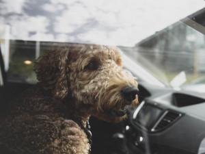 Aplikace Varuj mě upozorní řidiče na psa v autě či špatné parkování, výrazně ulehčí práci i policii a hasičům