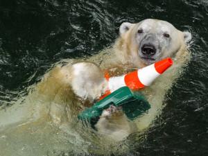 Brněnská zoo za 12,6 milionu rozšířila expozici lední medvědice