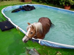 Hasiči museli vytáhnout muže z bahna a koně z bazénu