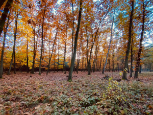POČASÍ NA PONDĚLÍ: Mírné ochlazení, přesto krásný podzimní den