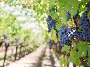 Od letošního jara prodáváme vína v podstatě jen ze sklepa, byli jsme ze dne na den na nule, říká vinař
