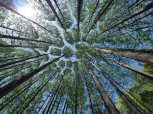 V brněnských městských lesích letos přibude více než milion stromů