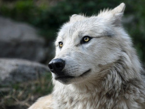 Ztráty určitě vidímev miliónech korun,říká mluvčí Zoo Brno