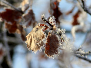 POČASÍ NA PÁTEK: Teploty se přes den jen mírně přehoupnou přes nulu