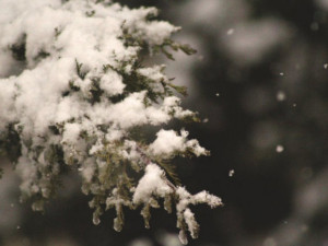 POČASÍ NA BOŽÍ HOD: Den po Vánocích konečně zasněží. Bílá pokrývka však dlouho nevydrží