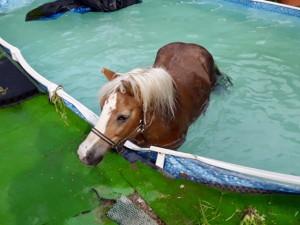 KRIMI PERLY ROKU 2020: Kozy na VUT, kůň v bazénu a léto ve znamení onanistů 1/3