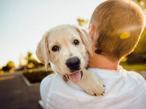 Novela zákona zahajuje boj proti množírnám. Od února nepůjde koupit psa ve zverimexu nebo na veřejných místech