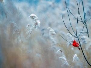 POČASÍ NA PONDĚLÍ: Mrazivé slunečné ráno a odpoledne sněžení