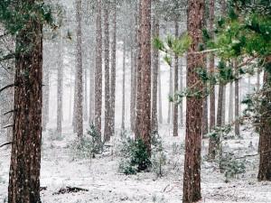 POČASÍ NA STŘEDU: Přes den teploty okolo nuly, k večeru sněžení