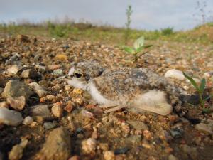 Zahubíte ohrožené ptáky, spílají ornitologové Brnu za územní plán