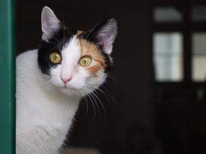 Veterináři v Brně: Víc lidí si za pandemie pořídilo psa či kočku