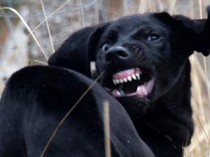 Agresivní pes ve Starém Lískovci si oblíbil kousání do lidí. Jeho majitel si z toho nic nedělá