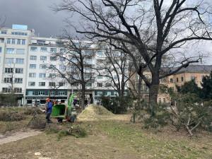 Moravské náměstí se připravuje na rekonstrukci, kácí se stromy
