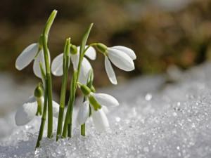 Dnes dopoledne začalo jaro, počasí ale bude ještě pár dnů zimní
