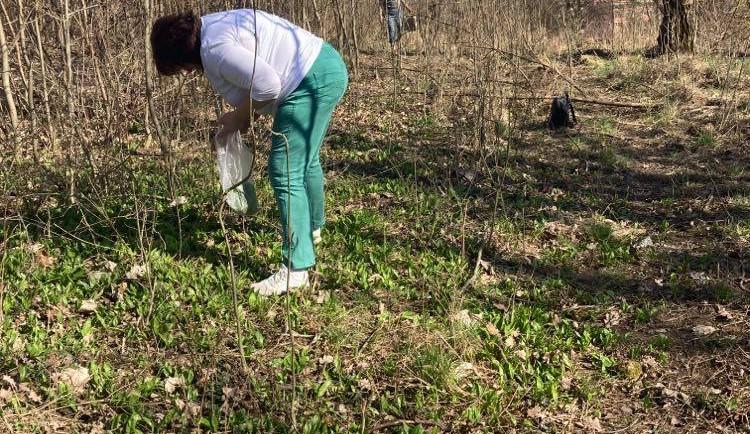 V Brně a jeho okolí roste medvědí česnek. Kde si je možné chutnou bylinku volně natrhat?