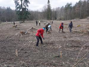 Lesníci zasadili na severu Brna stovky exotických stromů