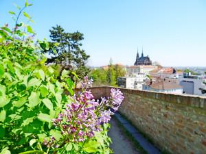Kup suvenýr, podpoříš strom. Brno spustilo e-shop na podporu lokálních výrobců a městské zeleně