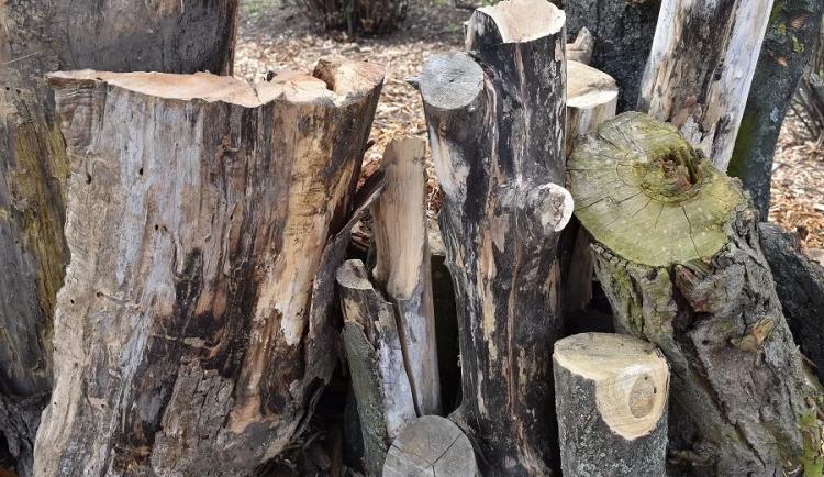 Doupné stromy jsou pro zvířata nenahraditelné. Musí se chránit, tvrdí ekologové