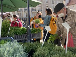Na brněnský Zelný trh se vrátili trhovci, nabízejí bylinky nebo květiny