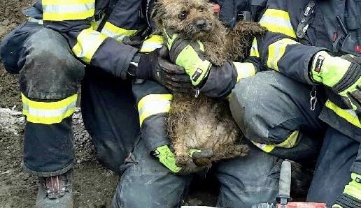 Hasiči vysvobodili po čtyřech hodinách pejska z kanalizace, přežila i kočka