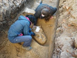 Archeologové hlásí unikátní objev. V Brně našli lebku pravěkého nosorožce