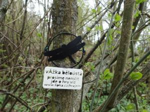 Slavíme Den Země, letos patří hmyzu
